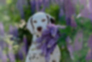 Gloriandus_Fata_Morgana_09-05-18 (3).jpg
