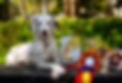 Gloriandus_Fata_Morgana_pBIS3-18-05-19 (