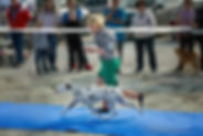 Gloriandus_Freddie_Mercury-rBIS-06-04-19