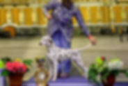 Gloriandus_Fata_Morgana_bBIS-III-16-03-1