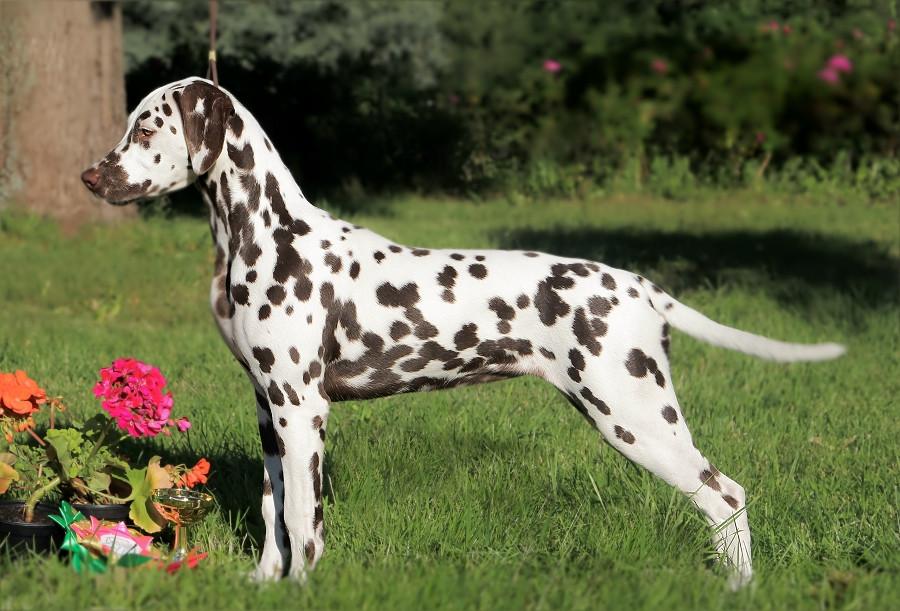 GLORIANDUS NAVARRA - puppy BOB