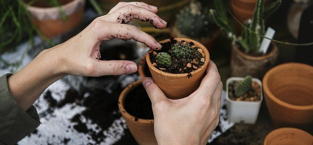 Can Gardening Be Used As A Mindfulness Practice?
