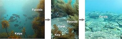 Species-shift-figure.jpg