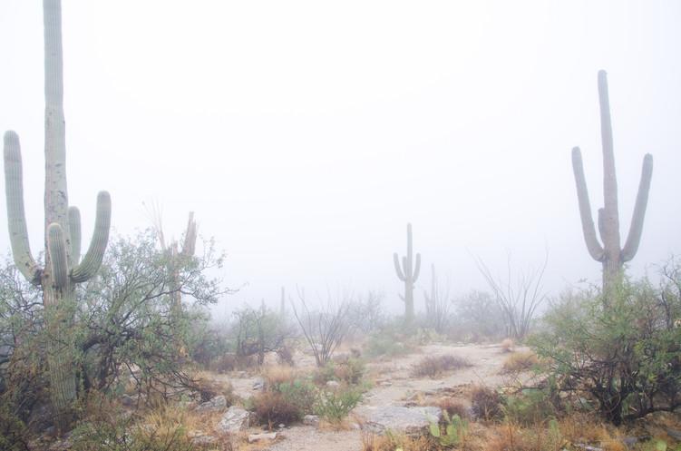 Mount Lemmon, Arizona 2013.
