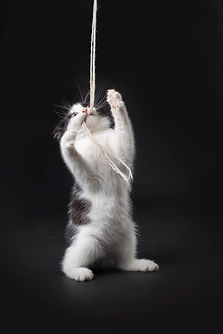 Vikki Kittens01.jpg