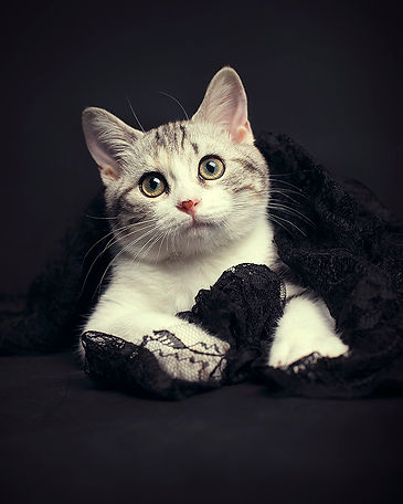 Raikou & Kittens13.jpg
