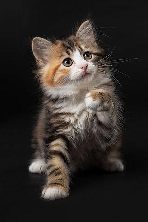 Vikki Kittens07.jpg