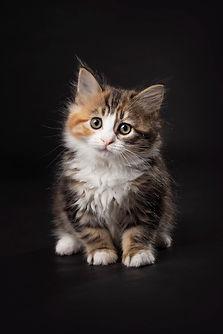 Vikki Kittens09.jpg