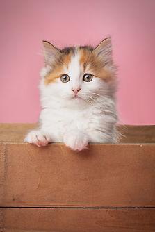 Vikki Kittens25.jpg