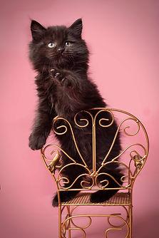 Vikki Kittens19.jpg