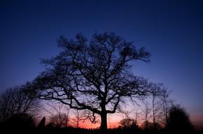 Dead tree Egloskerry.