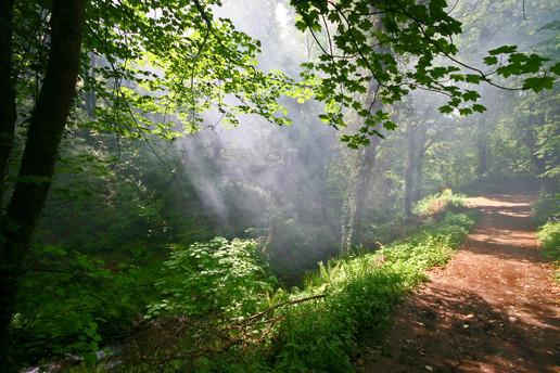 Path St Nectans glen, Cornwall.