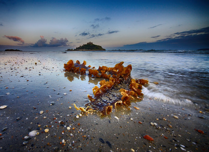 Seaweed and the Mount.