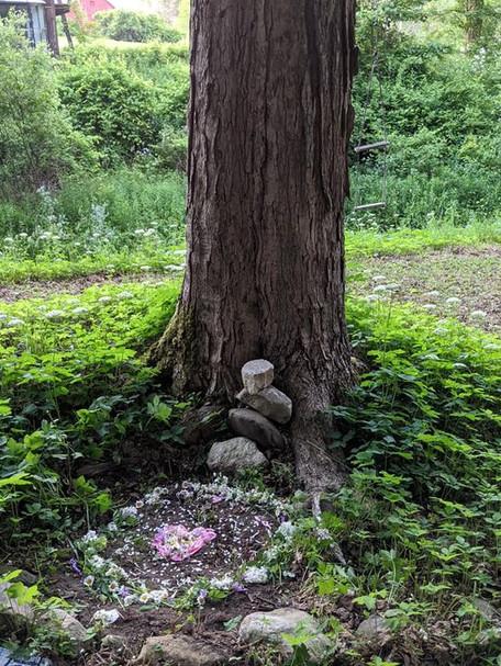 Ancient Tree Ceremony