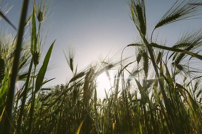 fertilizers-banner-large.jpeg