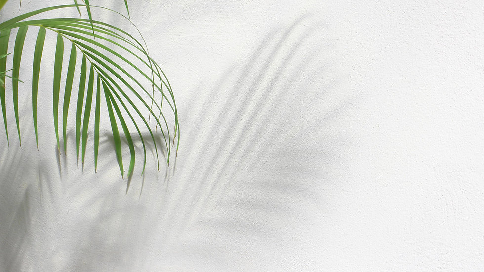 green-palm-tree-leaves-with-shadow-on-wh