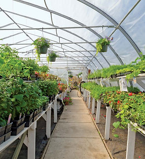 Interior-view-commercial-horticulture-gr