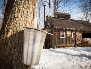 Un incentive sucré dans ma cabane au Canada...