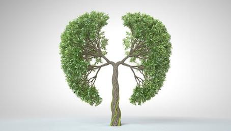 Covid 19 i meridijan pluća