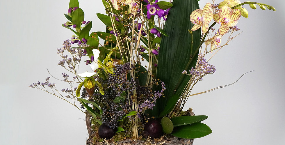 Selection of four orchids in a rustic basket with long-lasting decoration