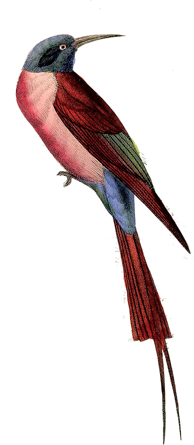 ptica.png