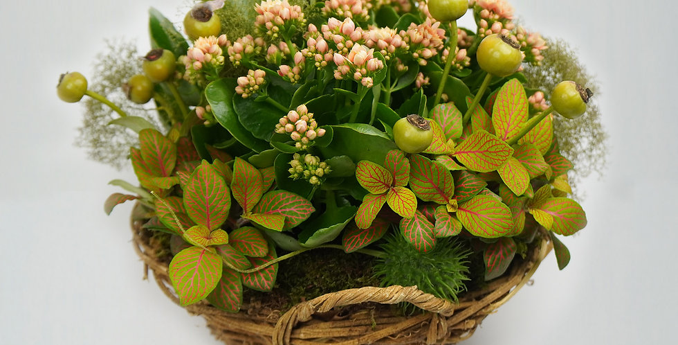 Four kalanchoes planted in a basket, with foliage and decorations