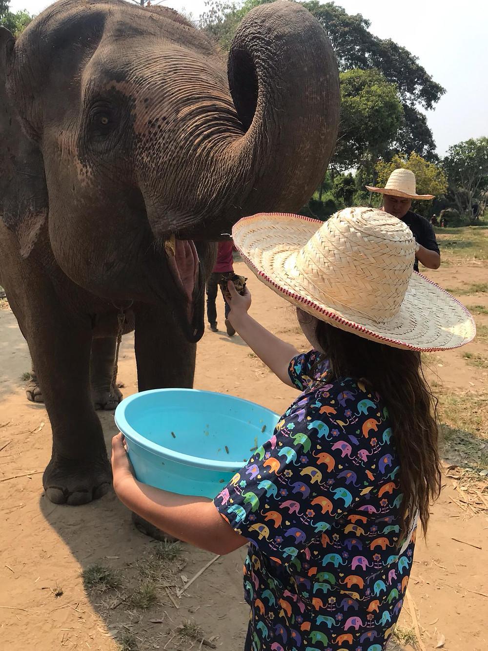 יהל מאכילה פיל בכדור ויטמינים
