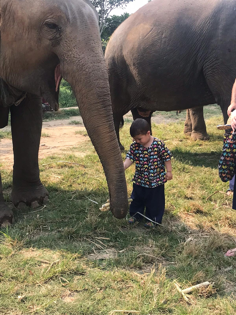 אילוני שמרגיש בבית. שימו לב שגם פילים מחייכים
