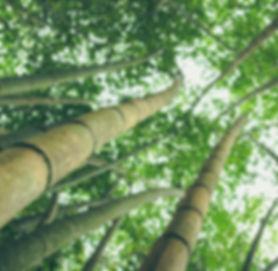new_banners_wood.jpg