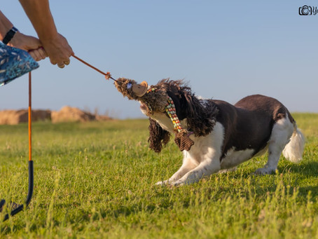 הכלב ההיפראקטיבי – קוים לדמותו