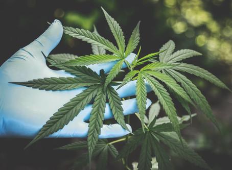 New York Won't Legalize Marijuana This Year