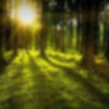 nature-3294681_1920_edited.jpg
