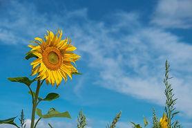 flower-5459972_1920.jpg