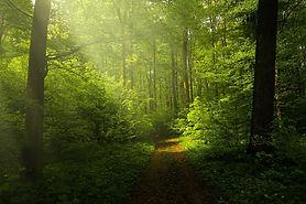 light-1345753_1280.jpg