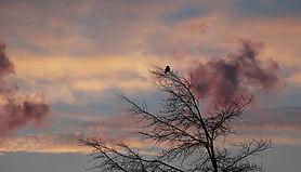 tree-3189333_1920.jpg