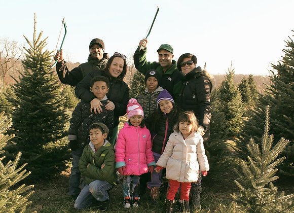Cut-Your-Own Christmas Tree 12-14'