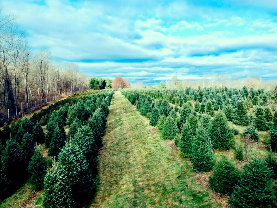 Award-Winning Fabulous Firs Christmas Tree Farm in ...