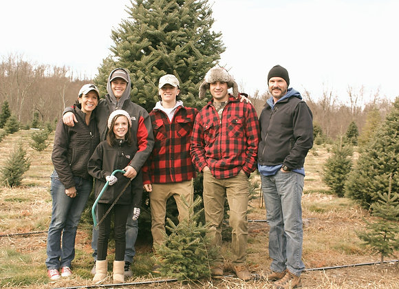Cut-Your-Own Christmas Tree 10-12'