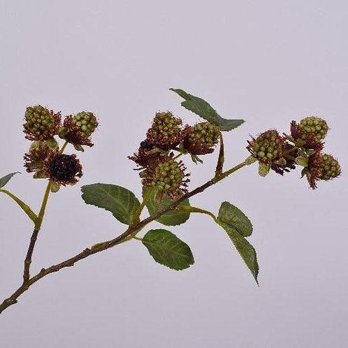 Fruit Branch Blackberries - Green & Brown