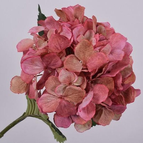 Hydrangea Stem - Green & Pink