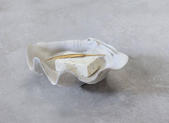 Coquillage vide poche et décoratif
