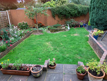 Lawn - Before