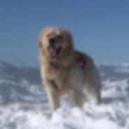 #alpinedogs Ridge enjoying the beautiful