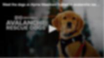 Screen Shot 2020-02-18 at 10.28.05 AM.pn