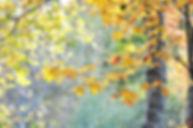 Fall Light.jpg