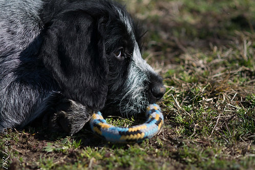 Drahthaar Puppy Deposit