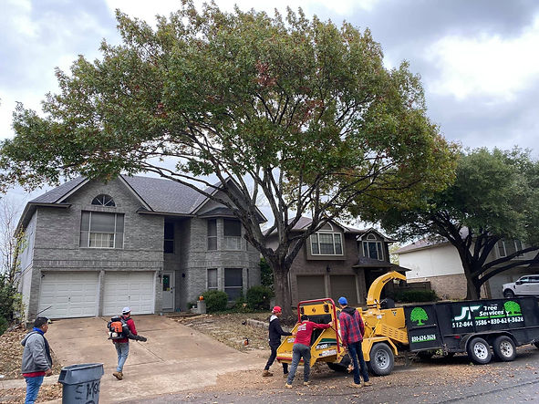 Georgetown Tree Services