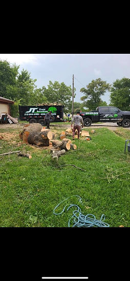 tree removal Round Rock