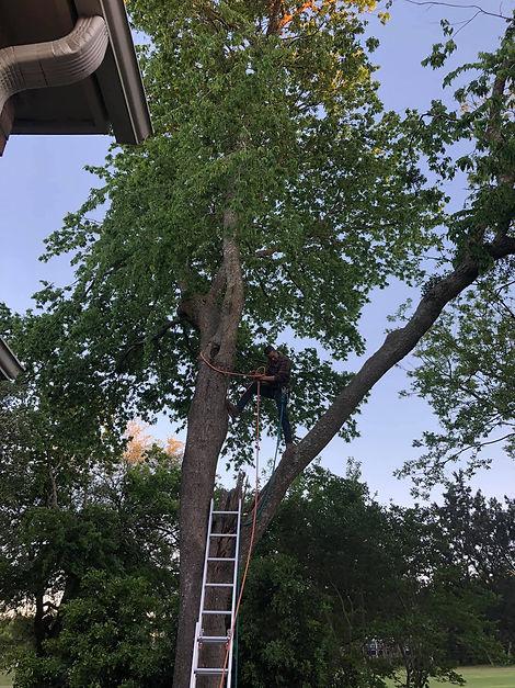 Round Rock tree services
