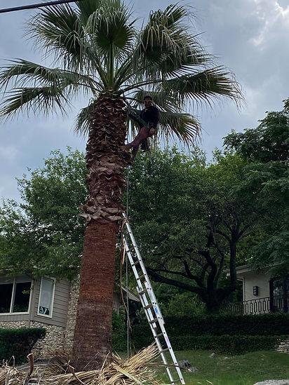 Round Rock tree trimming